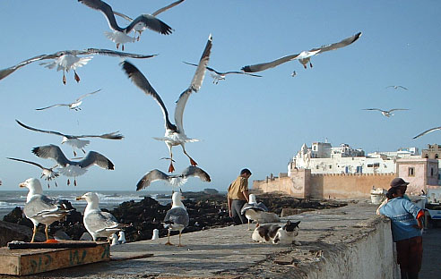 Essaouira,the seagull heaven.
